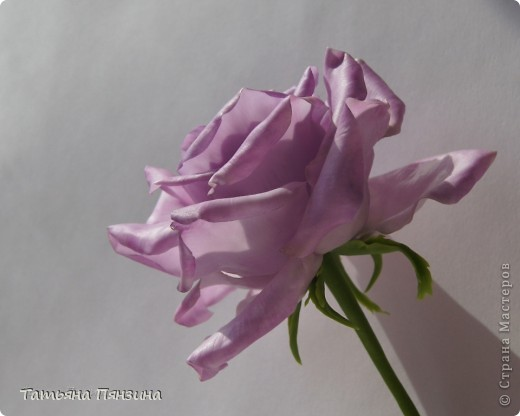 Давно хотела розу такого цвета, а тут еще и новую глину приобрела. Вот что у меня получилось. . Выполнена роза из полимерной тайской глины Flower Clay, по составу близкой к холодному фарфору. Очень приятная в работе.  фото 2