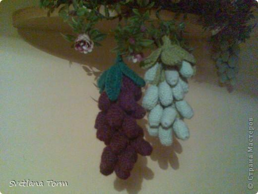 Moj pervyj vinograd. фото 1
