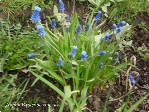 Красавица Весна фото 2