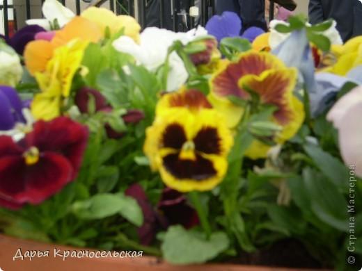 Красавица Весна фото 1