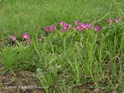 Красавица Весна фото 4