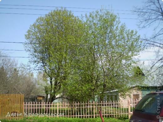 Красавица Весна фото 7