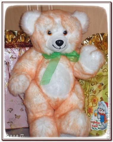 Медведи фото 5