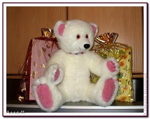 Медведи фото 6