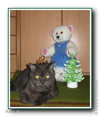 Медведи фото 2
