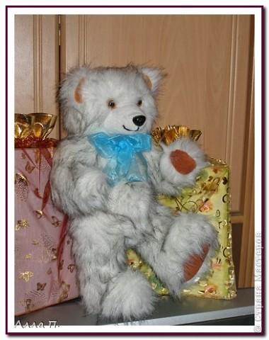 Медведи фото 4
