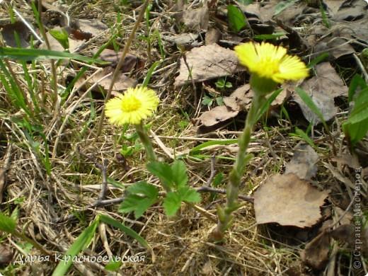 Красавица Весна фото 10