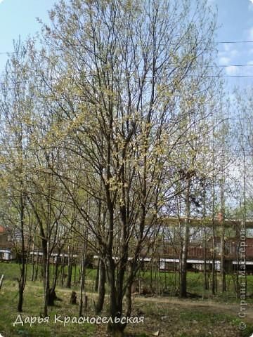 Красавица Весна фото 16
