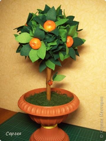 Ну вот, у меня ещё одно деревце появилось. Теперь с мандаринками.   фото 1