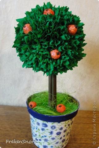 мои новые деревца фото 1