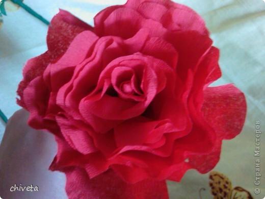 Мои розы фото 2