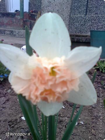 моята градина фото 3