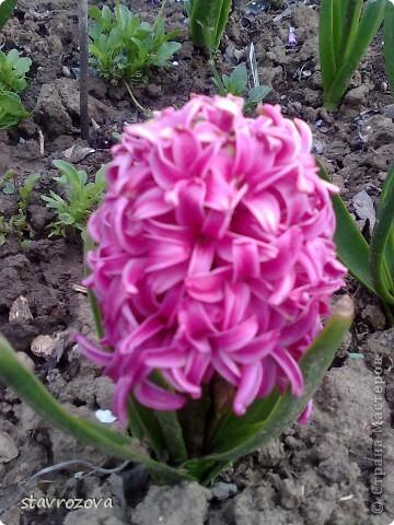 моята градина фото 1
