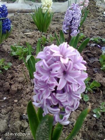 моята градина фото 2