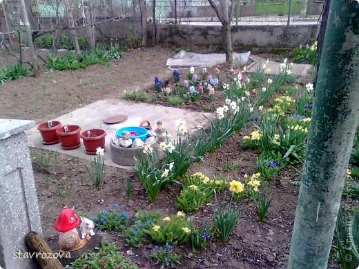 моята градина фото 4