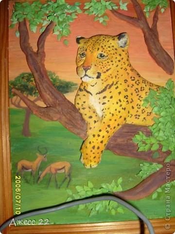 Леопард. фото 2