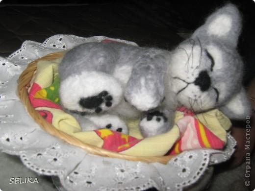 котёнок Соня спит и спит фото 3