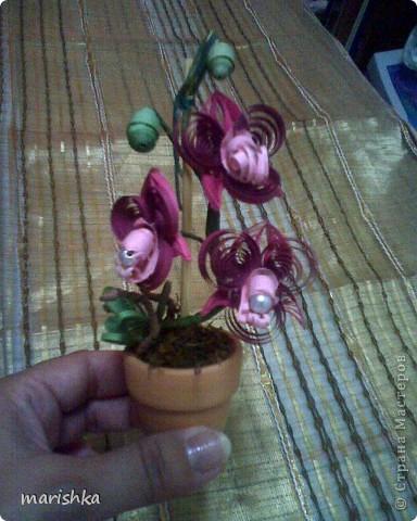 Доброго времени суток всем,кто заглянул ко мне в гости. Я понимаю,что не первая,кто пытается создать орхидеи.Эту миниатюрку делала на пробу. Очень хотелось сделать цветочек в горшке. фото 4