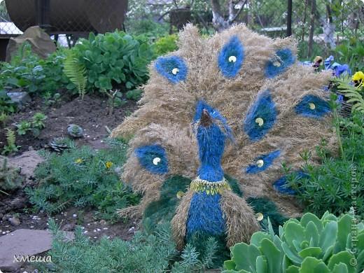 Сказочная птица фото 3