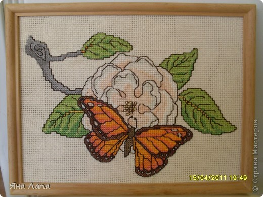 Вот такая бабочка. фото 3