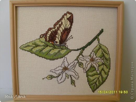 Вот такая бабочка. фото 1