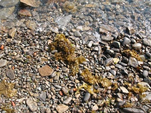 """Не коряга,а """"""""мечта флориста""""""""!Её практически не было видно из-под песка и водорослей,Провозившись с корягой минут сорок,я обнаружила вот эту красоту! фото 3"""