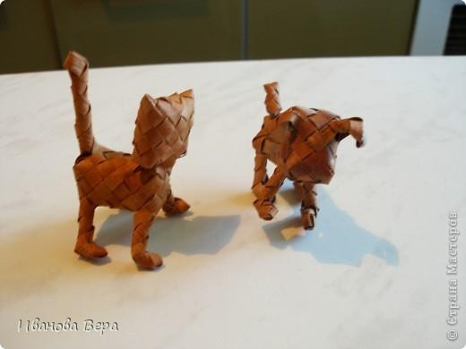 Кошечка и собачка вместе фото 1