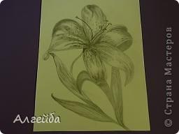 Лилия фото 1