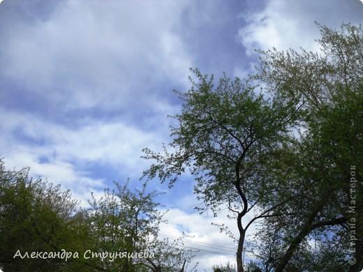 У нас на Урале весна только начинается и цветущих растений совсем немного. Но кое-что всё-таки глаз радует! фото 1