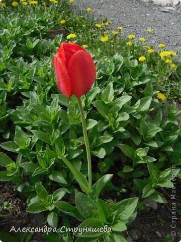У нас на Урале весна только начинается и цветущих растений совсем немного. Но кое-что всё-таки глаз радует! фото 4