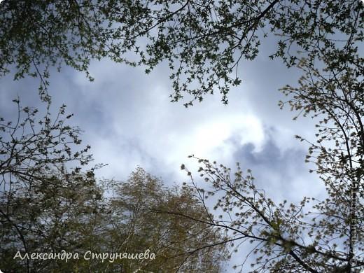 У нас на Урале весна только начинается и цветущих растений совсем немного. Но кое-что всё-таки глаз радует! фото 6