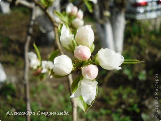 У нас на Урале весна только начинается и цветущих растений совсем немного. Но кое-что всё-таки глаз радует! фото 9