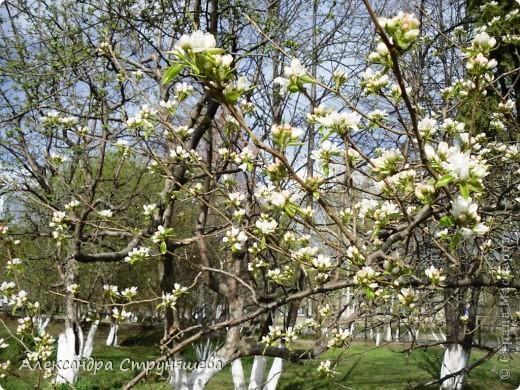У нас на Урале весна только начинается и цветущих растений совсем немного. Но кое-что всё-таки глаз радует! фото 10