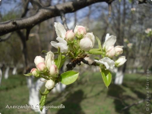 У нас на Урале весна только начинается и цветущих растений совсем немного. Но кое-что всё-таки глаз радует! фото 11