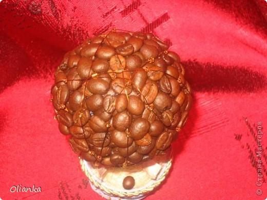Топиарий-кофейное дерево. фото 3