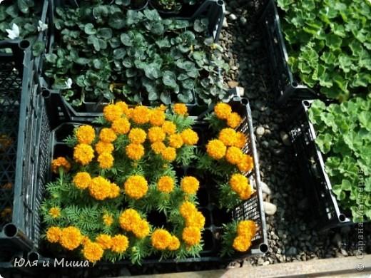 Гуляли, гуляли... И догулялись до цветочного рынка! Заранее предупреждаю вопросы о том где какой цветок, я в них не разбираюсь, просто любуюсь. Но, насколько я могла узнать у мамы, все цветы представленные на этих фото общеизвестны. так что просто приятного Вам просмотра!  фото 9