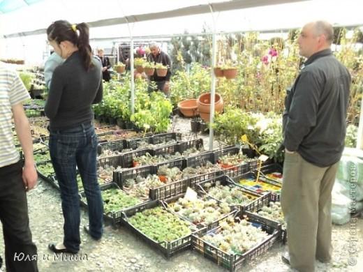 Гуляли, гуляли... И догулялись до цветочного рынка! Заранее предупреждаю вопросы о том где какой цветок, я в них не разбираюсь, просто любуюсь. Но, насколько я могла узнать у мамы, все цветы представленные на этих фото общеизвестны. так что просто приятного Вам просмотра!  фото 2