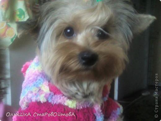 Для своей соседки-маленькой собачки Джесси связала комбинезон. фото 4