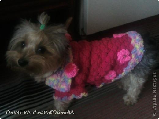 Для своей соседки-маленькой собачки Джесси связала комбинезон. фото 3