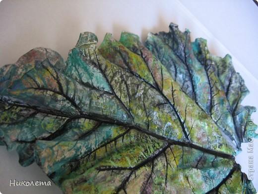 На даче вырос ревень вот с такими листочками, давно хотела попробовать сделать гипсовые отливки. Листочки примерно 20 см в длину. фото 5
