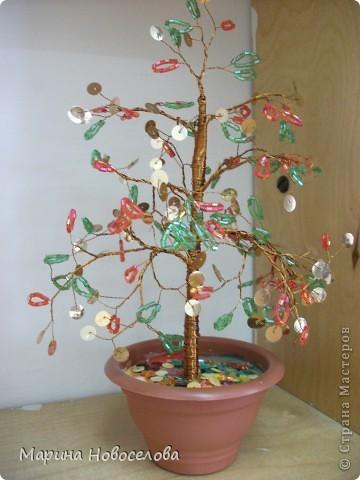 Деревья фото 5