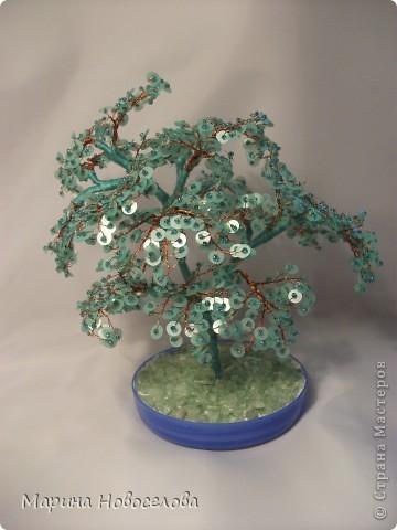 Деревья фото 9