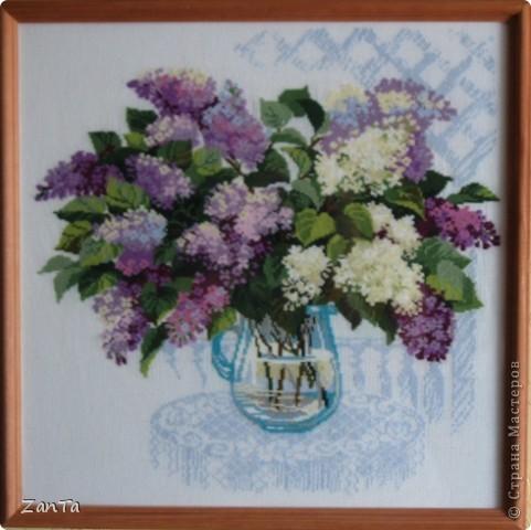 Голубая, лиловая, синяя, белая Расцвела нынче в мае сирень.  Я хожу и любуюсь, как ошалелая На цветущие кисти весь день.... фото 1