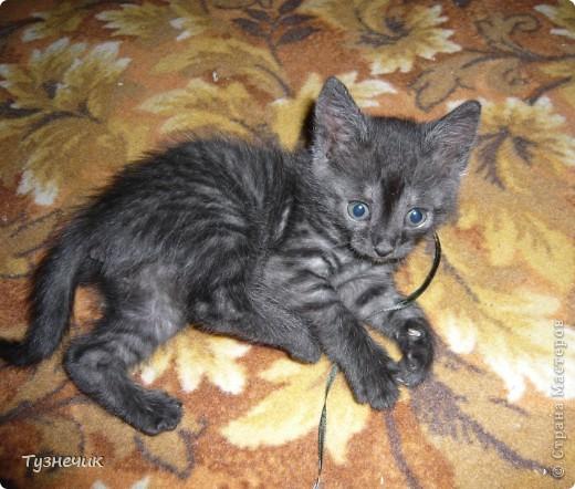 Устал после охоты на Мышильду, так с ней и заснул)))) фото 4
