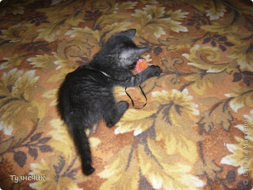 Устал после охоты на Мышильду, так с ней и заснул)))) фото 5