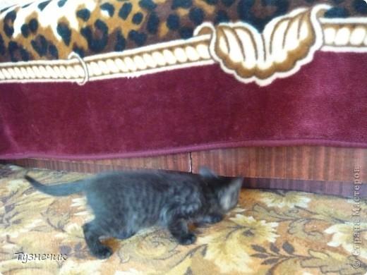 Устал после охоты на Мышильду, так с ней и заснул)))) фото 8