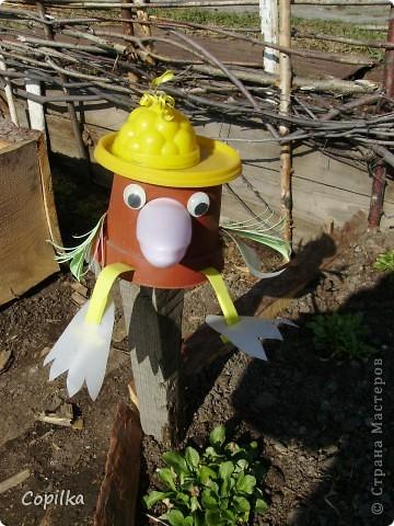 Вот такая птичка следит за моей клумбой ( пока ещё не цветёт ничего - холодина,с утра даже вода в бочке подмёрзла!) фото 1