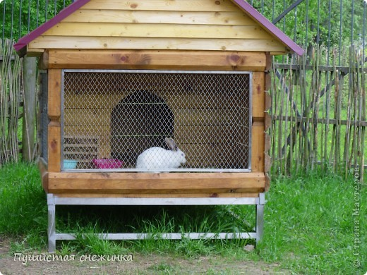 Белый кролик. фото 1