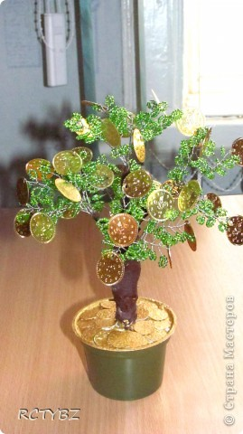 пуговичное дерево фото 2