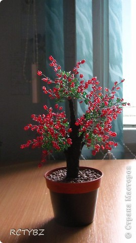 пуговичное дерево фото 3